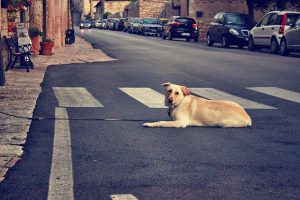 Come soccorrere animali feriti o abbandonati in strada